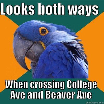 LOOKS BOTH WAYS   WHEN CROSSING COLLEGE AVE AND BEAVER AVE Paranoid Parrot