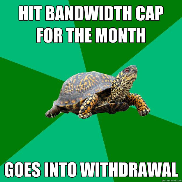 hit bandwidth cap for the month goes into withdrawal  Torrenting Turtle
