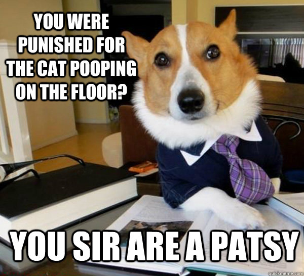 You Were Punished For The Cat Pooping On The Floor? You Sir Are A Patsy