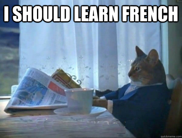 I should learn French  - I should learn French   morning realization newspaper cat meme