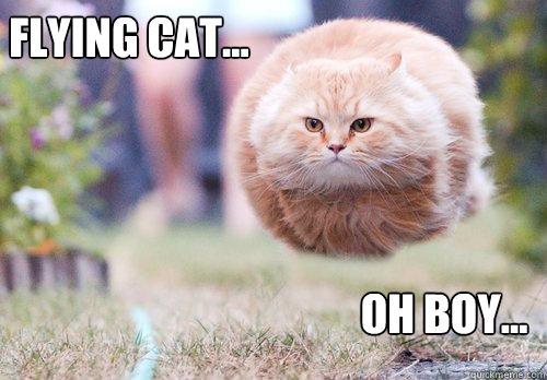 Flying cat... Oh boy...  Flying cat