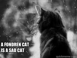 A Fondren Cat Is a Sad Cat  Sad cat