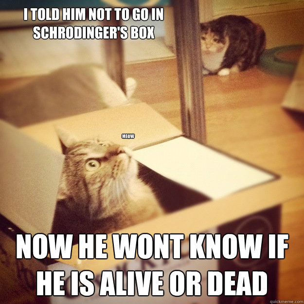 I told him not to go in schrodinger's box now he wont know if he is alive or dead Meow