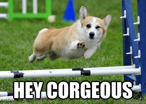 Hey corgeous