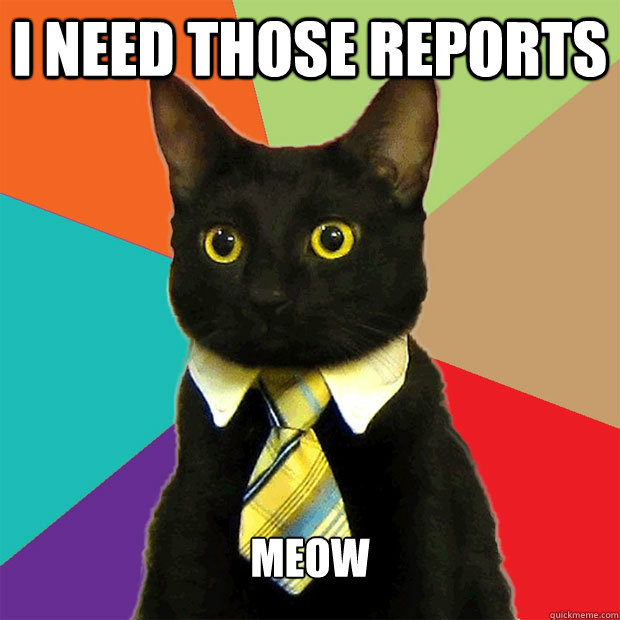 I need those reports Meow - I need those reports Meow  Business Cat