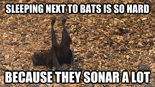 Sleeping next to bats is so hard Because they sonar a lot - Sleeping next to bats is so hard Because they sonar a lot  Misc