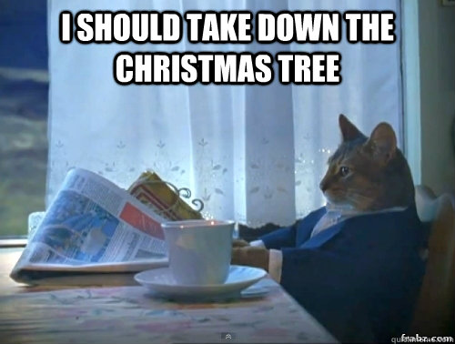 I should take down the christmas tree  - I should take down the christmas tree   Contemplative Breakfast Cat