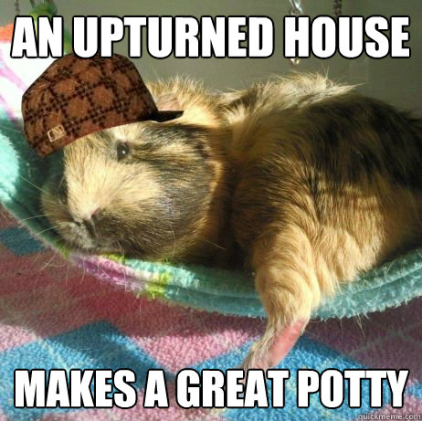 an upturned house makes a great potty  Scumbag Guinea Pig