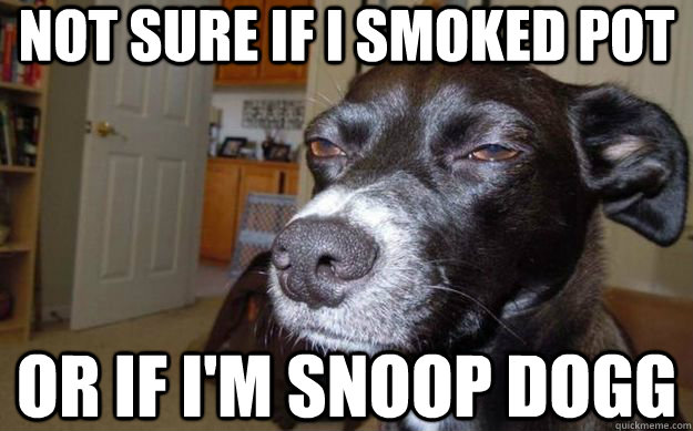Not sure if I smoked pot or if I'm Snoop Dogg - Not sure if I smoked pot or if I'm Snoop Dogg  Skeptical Mutt