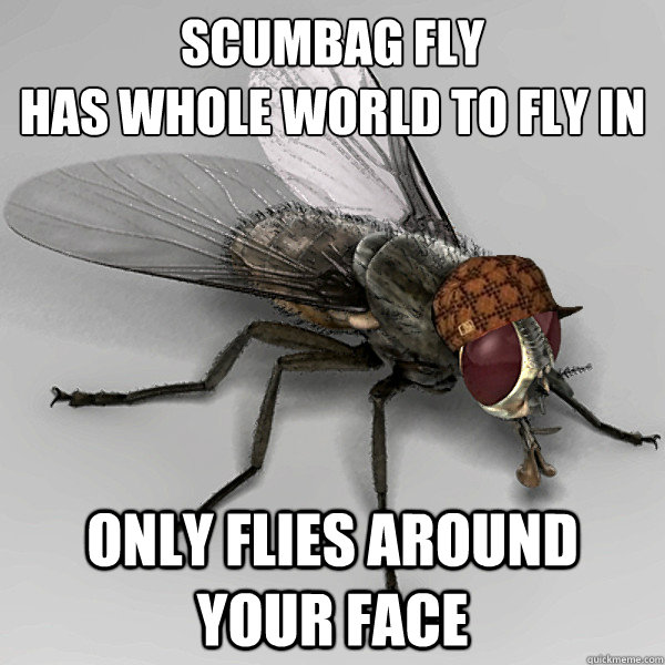 scumbag fly  has whole world to fly in only flies around your face  - scumbag fly  has whole world to fly in only flies around your face   Misc