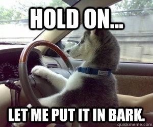 Dog S Driving Car S Memes