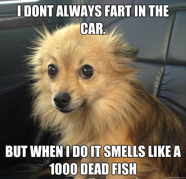 I dont always fart in the car. but when I do it smells like a 1000 dead fish