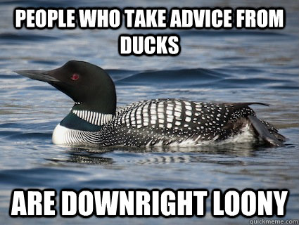 People who take advice from ducks Are downright loony - People who take advice from ducks Are downright loony  Irony Loon