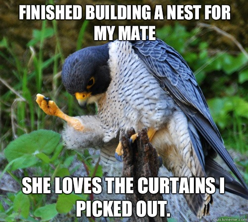 Finished Building a nest for my mate She loves the curtains I picked out.