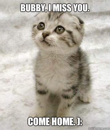 super cute cat Super Funny Cat Pictures With Captions