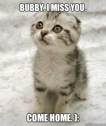 Bubby I Miss You Come Home Super Cute Cat Quickmeme