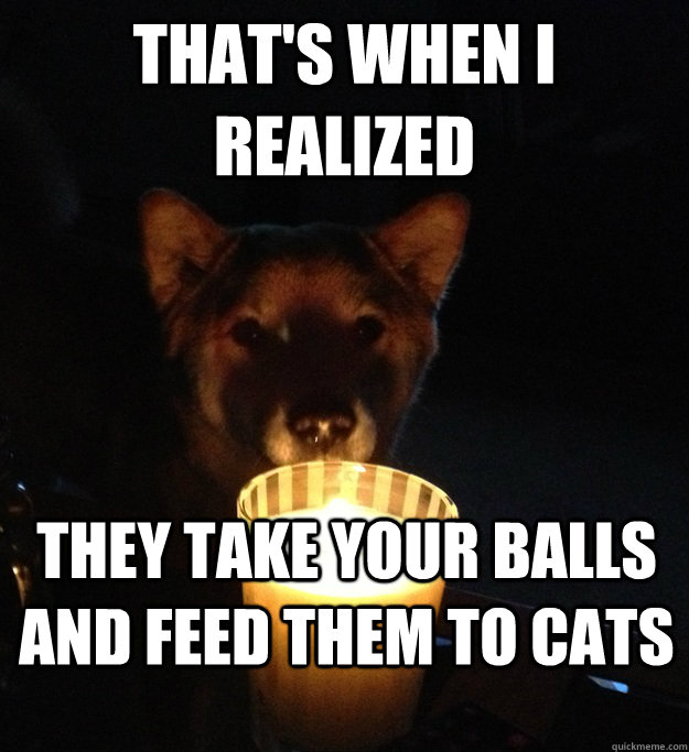THAT'S WHEN I REALIZED they take your balls and feed them to cats - THAT'S WHEN I REALIZED they take your balls and feed them to cats  Scary Story Dog