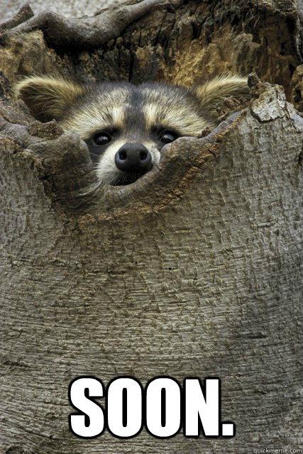 Soon.  Stalker Raccoon