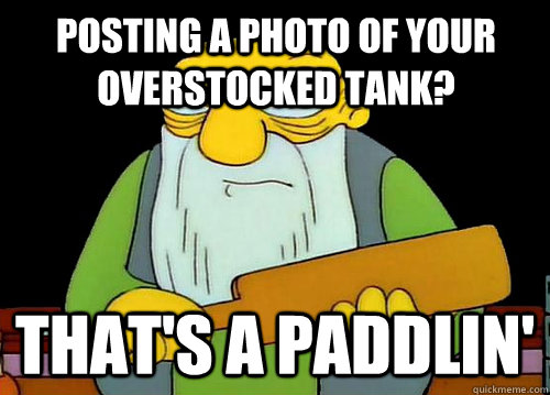 Posting a photo of your overstocked tank? That's a Paddlin'