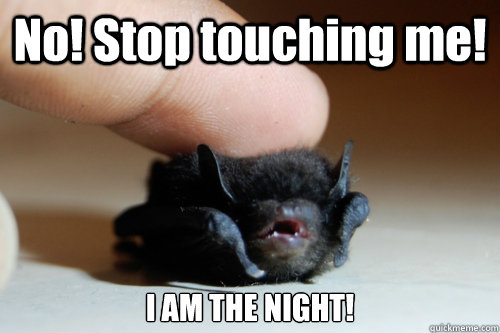 No! Stop touching me! I AM THE NIGHT! - No! Stop touching me! I AM THE NIGHT!  Baby Bat