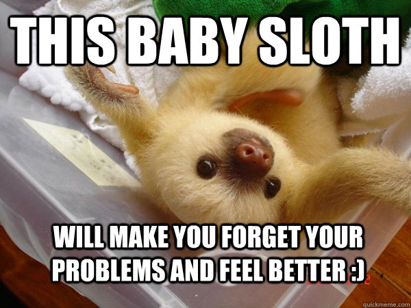 baby sloth Will ma...
