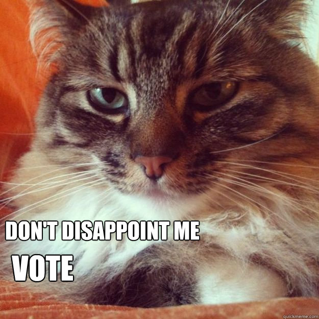 Don't disappoint me Vote  VoteCat