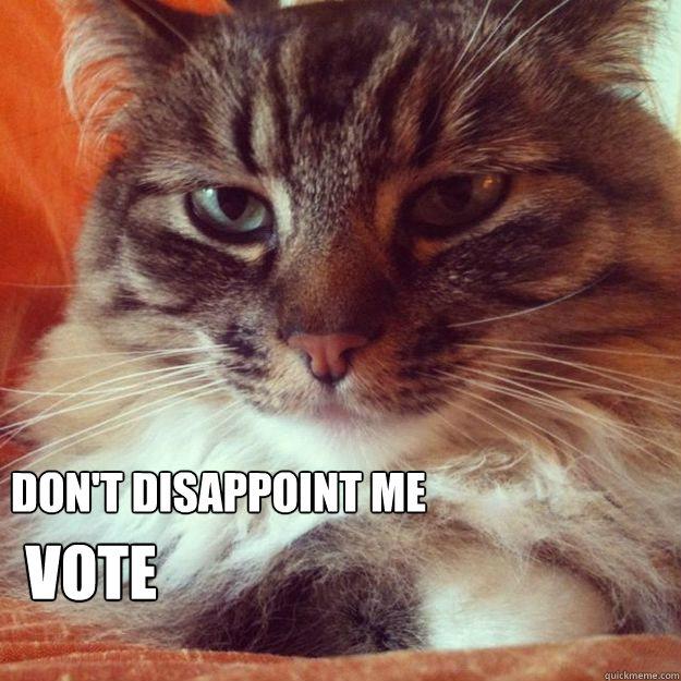 Don't disappoint me Vote - Don't disappoint me Vote  VoteCat