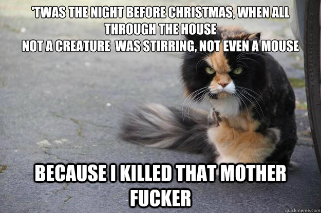 'twas the night before christmas, when all through the house not a creature  was stirring, not even a mouse Because i killed that mother fucker  Angry Cat