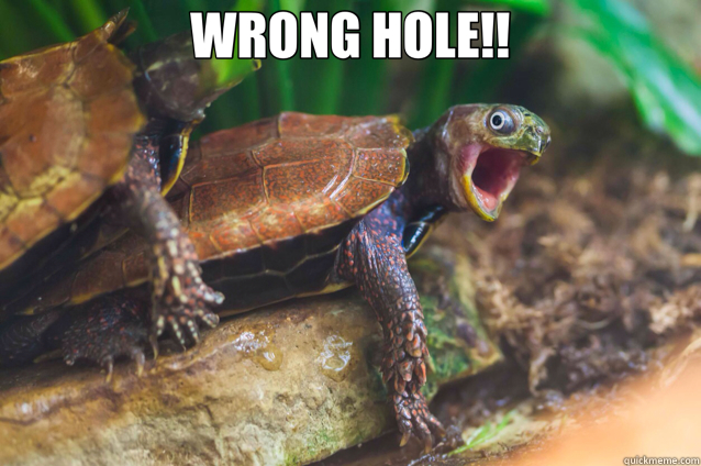WRONG HOLE!!   turtle