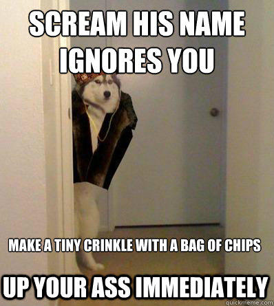 SCREAM HIS NAME IGNORES YOU MAKE A TINY CRINKLE WITH A BAG OF CHIPS  UP YOUR ASS IMMEDIATELY  Scumbag dog