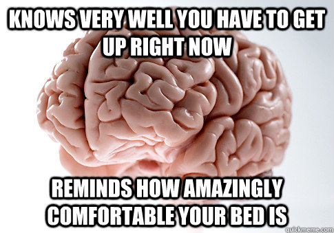 Knows very well you have to get up right now reminds how amazingly comfortable your bed is - Knows very well you have to get up right now reminds how amazingly comfortable your bed is  Scumbag Brain