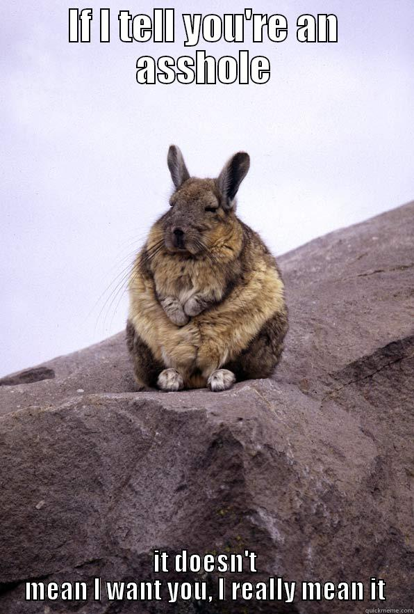 IF I TELL YOU'RE AN ASSHOLE IT DOESN'T MEAN I WANT YOU, I REALLY MEAN IT Wise Wondering Viscacha