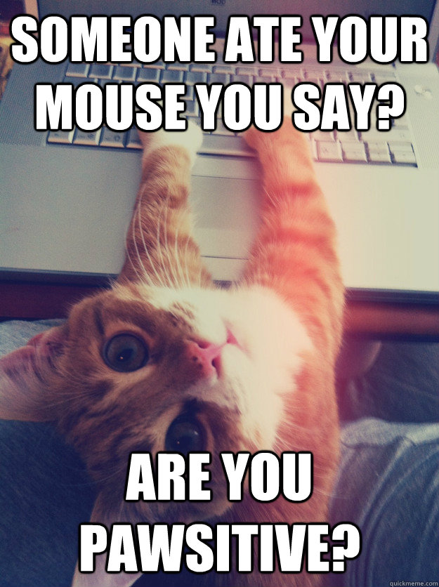 Someone ate your mouse you say? Are you pawsitive?  Programmer Cat