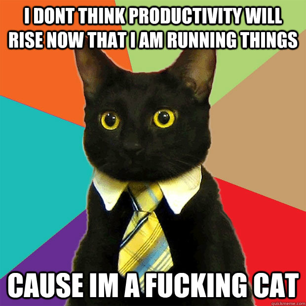 I dont think productivity will rise now that i am running things cause im a fucking cat - I dont think productivity will rise now that i am running things cause im a fucking cat  Business Cat