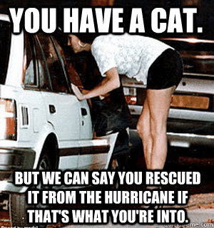 You have a cat.  But we can say you rescued it from the hurricane if that's what you're into. - You have a cat.  But we can say you rescued it from the hurricane if that's what you're into.  Karma Whore