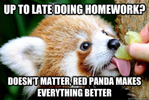 Up to late doing homework? Doesn't matter, Red panda makes everything better