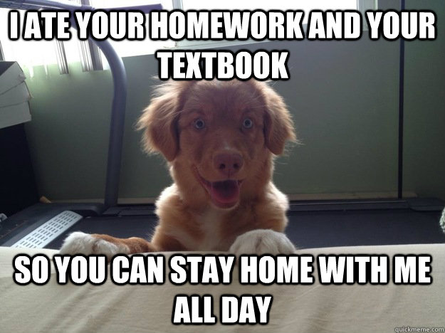 i ate your homework and your textbook so you can stay home with me all day  Overly Attached Dog