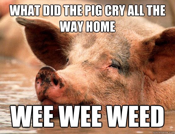what did the pig cry all the way home wee wee weed   Stoner Pig