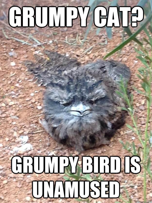 Grumpy cat? Grumpy Bird is unamused - Grumpy cat? Grumpy Bird is unamused  Grumpy Bird