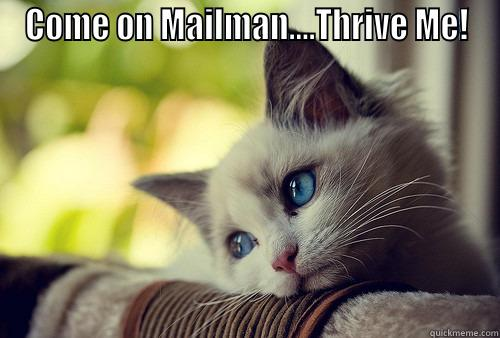 Waiting Patiently - COME ON MAILMAN....THRIVE ME!  First World Problems Cat