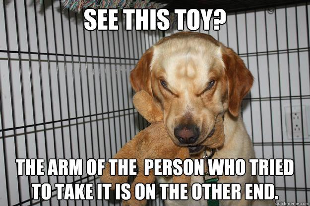 dog toy meme