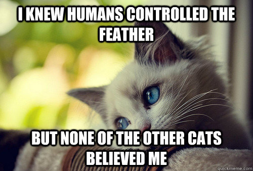 I knew humans controlled the feather But none of the other cats believed me - I knew humans controlled the feather But none of the other cats believed me  First World Cat Problems