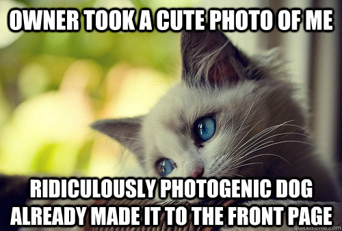 Owner took a cute photo of me Ridiculously Photogenic dog already made it to the front page - Owner took a cute photo of me Ridiculously Photogenic dog already made it to the front page  First World Cat Problems
