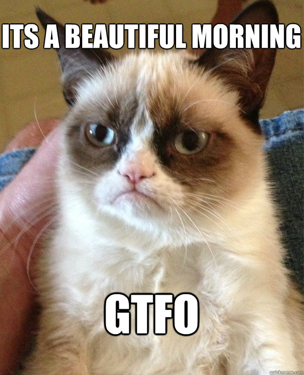 Its a beautiful morning GTFO - Its a beautiful morning GTFO  Grumpy Cat