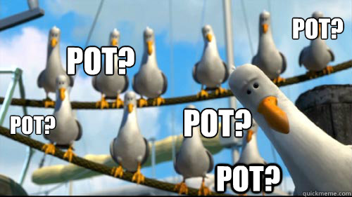 Pot? Pot? Pot? Pot? Pot? - Pot? Pot? Pot? Pot? Pot?  Scumbag seagull