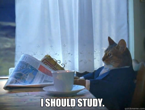 I should study.  -  I should study.   The One Percent Cat