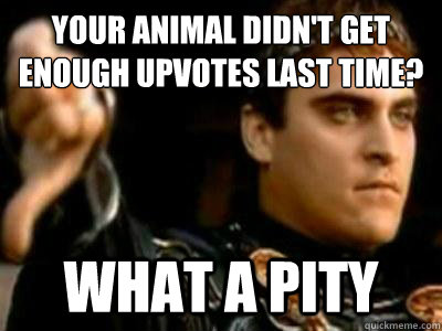 Your animal didn't get enough upvotes last time? What a pity - Your animal didn't get enough upvotes last time? What a pity  Downvoting Roman
