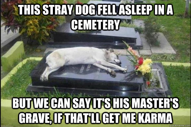 This stray dog fell asleep in a cemetery But we can say it's his master's grave, if that'll get me karma - This stray dog fell asleep in a cemetery But we can say it's his master's grave, if that'll get me karma  Misc