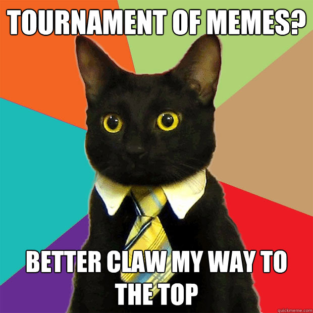 Tournament of Memes? Better claw my way to the top - Tournament of Memes? Better claw my way to the top  Business Cat