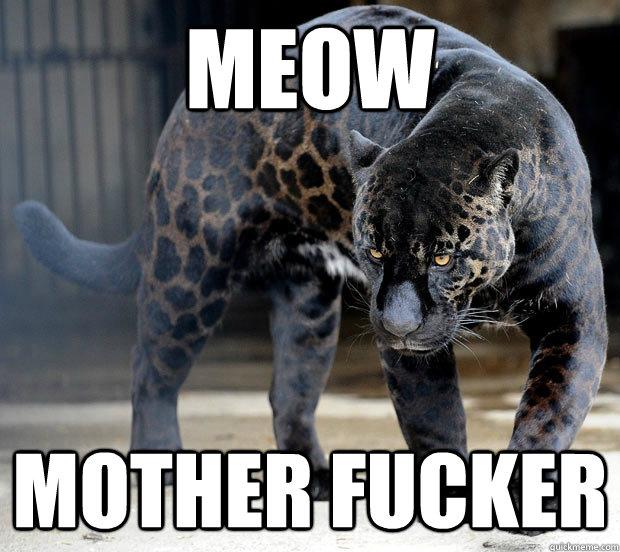 df988a6f07bb56d6cb658a94dbdb305dece50c54d08ece7ed4db17a45bd58d99 meow memes quickmeme,Meow Meme